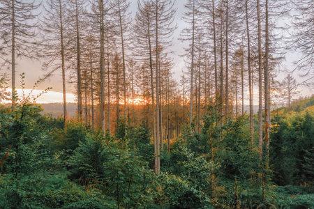 A golden autumn sunset between tall bare trees in a valley Stok Fotoğraf