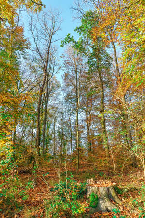 An autumnal scene in the forest on a sunny October afternoon