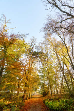 Green autumn tree tops on a sunny morning