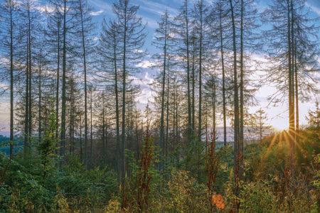 A golden summer sunset between tall trees in a valley