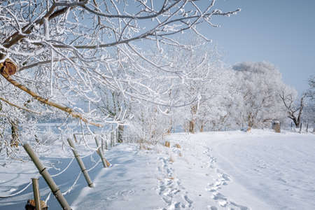 A snow-covered landscape in the winter morning sun Stok Fotoğraf