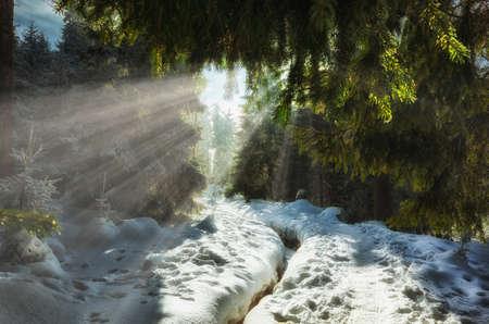 Wonderful winter forest sun rays shines through the needles Stok Fotoğraf