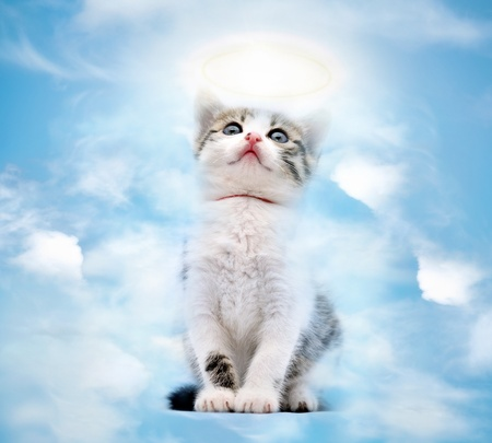 Young kitty goes to heaven