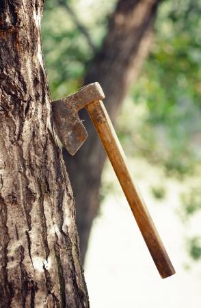 deforestacion: Concepto sobre el peligro de la deforestación Foto de archivo