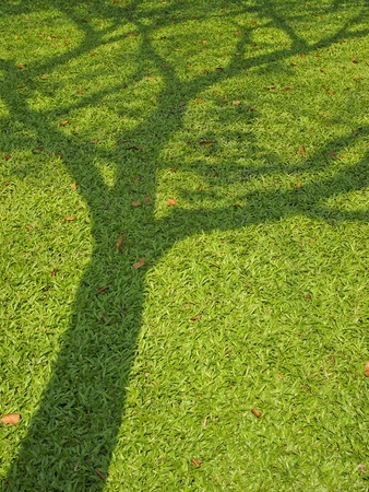 shadow of big tree on  lawn in afternoon Stock Photo
