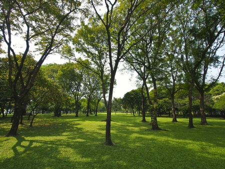tree and shadow of green park in cloudy day Stock Photo - 17693310