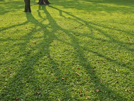 shadow of dual tree on lawn in the park