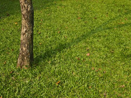 base tree and shadow spread on lawn Stock Photo - 17819723