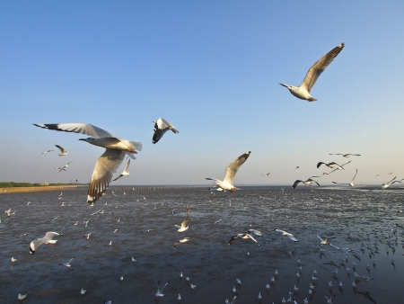 groups of seagull soar in sky at bangpu seaside Thailand