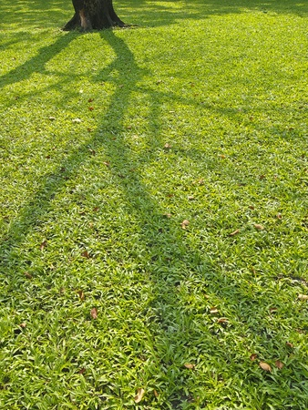 shadow of tree spread on lawn in daytime Stock Photo - 19840457