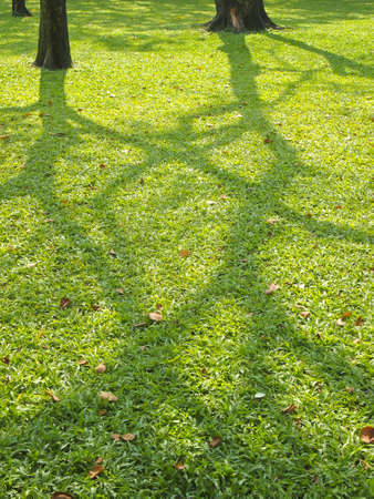 shadow tree on lawn in park during the daytime Stock Photo - 19840446