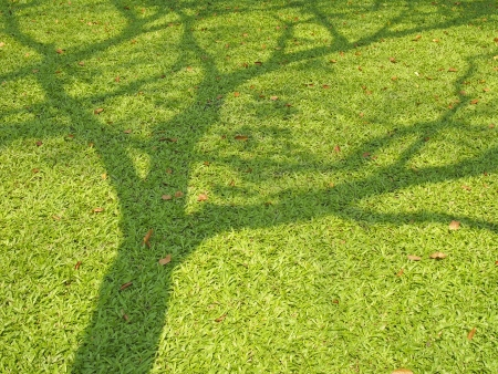 shadow of big tree spread on lawn in daytime Stock Photo - 19840447
