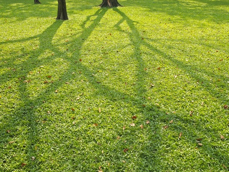 shadow of tree spread on green lawn in daytime Stock Photo - 19840454