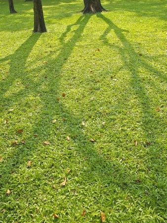 shadow of tree spread on lawn in public park Stock Photo - 19840455