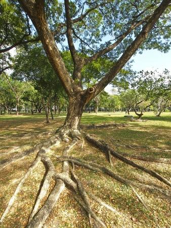 big tree in public park in sunny day Stock Photo - 19840453