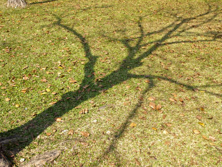 shadow of bare tree on lawn of park in sunny day Stock Photo - 24989649