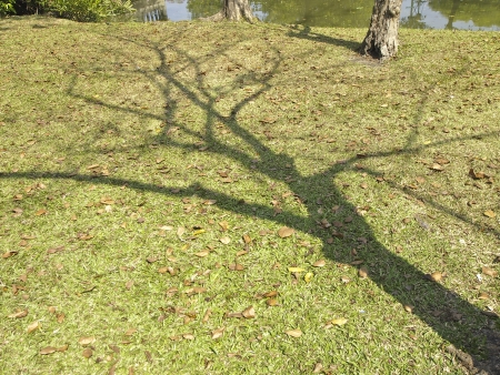 shadow of bare tree on waterfront of park in sunny day Stock Photo - 24989725