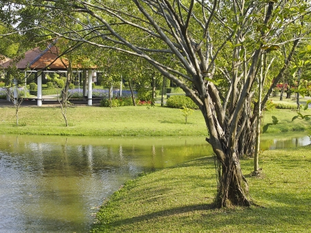 scenic of tree and waterfront in Suanluang rama9  park, bangkok, Thailand Stock Photo - 24989729