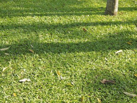 green lawn in light with shadow line of tree
