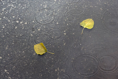 leaves fall on flooding street in raining