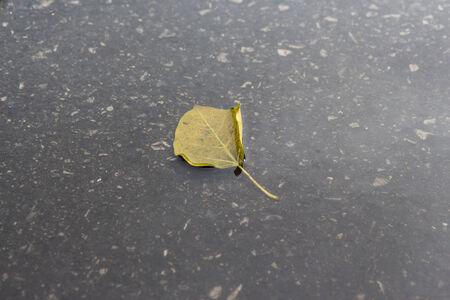 tiny leaf fall on flooding street floor