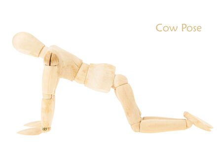 demonstration of wood manikin in cow pose on white background. this pose is part of yoga training.