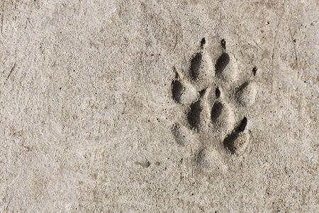 space and dog footprints imprint on concrete floor