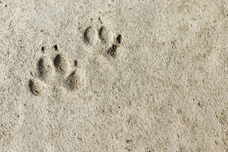 flaw: pair of dog footprints imprint on concrete floor