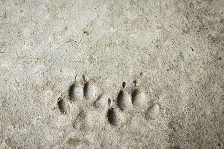 pair of dog footprint  on concrete floor photo