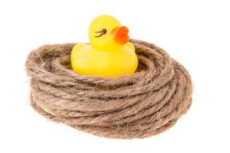 duckie: little duck in hemp coil like nest on white background Stock Photo