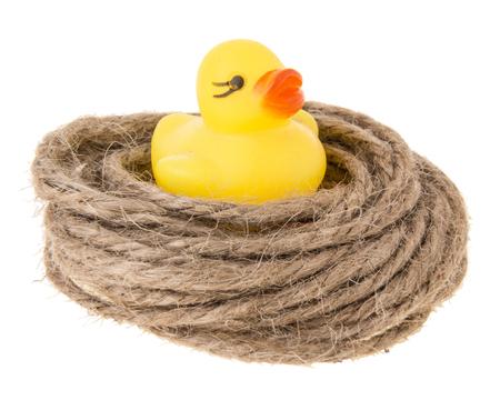 coil: little duck in hemp coil like nest on white background Stock Photo