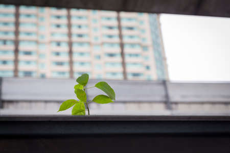 tiny plant grown in big city in daytime Stock Photo