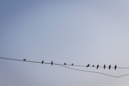 biped: group of pigeon bird perch on cable line in blue sky