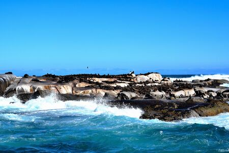 Sealions at Duiker Island