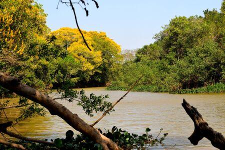 Classic wonderful panorama of a Wetland, Pantanal, Brazil Reklamní fotografie