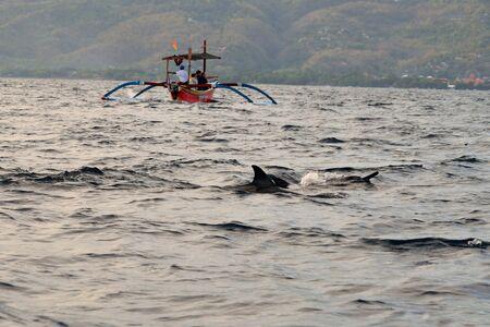 Group of dolphins at sunrise in Lovina, Bali Foto de archivo