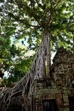 View of the beautiful famous temple of Ta Prhom, Angkor, Cambodia