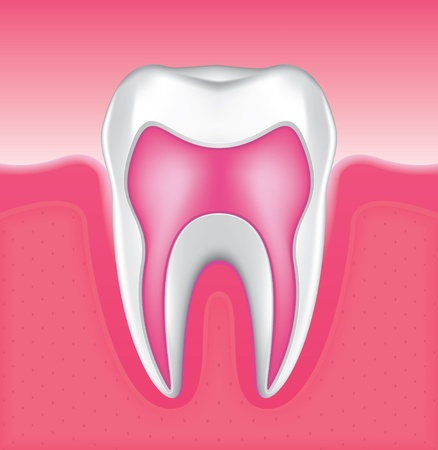 enamel: Drawing of the gums and tooth enamel