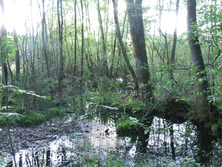Bavarian forest moor