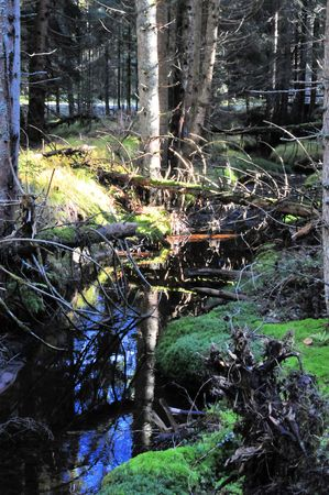 Landscape swamp bavaria