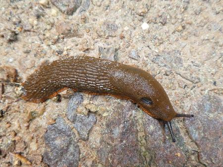 slug on a stone Imagens