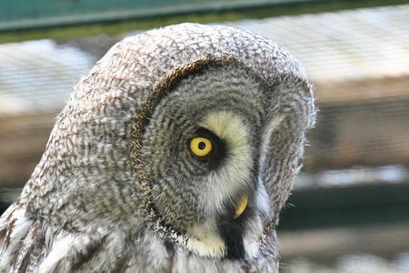 Owl yellow eye Stock fotó