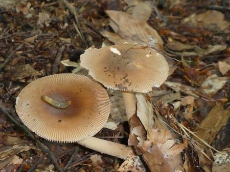 slug on a brown mushroom