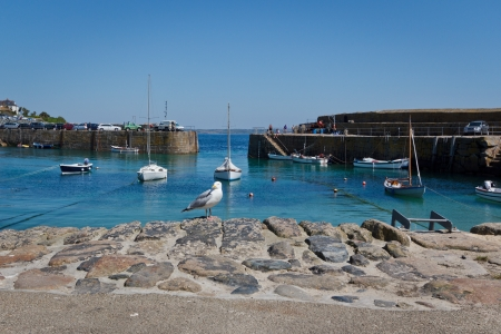 mousehole: Seagull at Mousehole Harbour, Cornwall Stock Photo