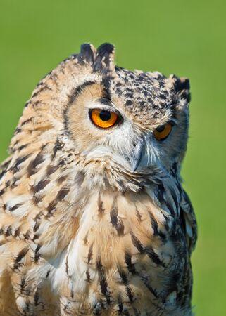 Lone Owl Stock Photo - 14992761