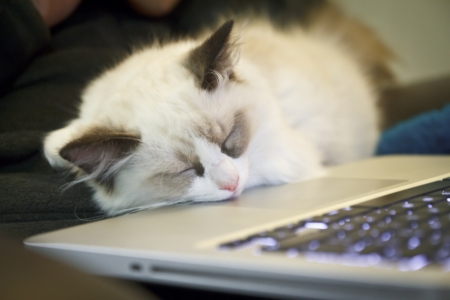 Kitten Asleep on a Laptop Stock Photo - 15657338