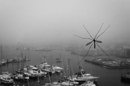 A large crane fly clings to a window overlooking Falmouth Harbour Stock Photo