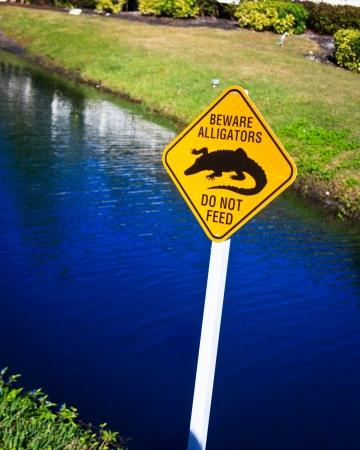 Warning Alligators in Florida