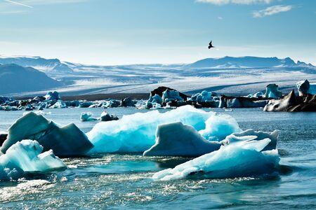Artic Tern over Jokulsarlon Glacier Lagoon Stock Photo - 16475313