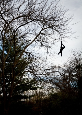 Gibbon hanging from a tree by one hand Stock Photo - 17386591